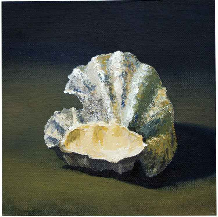 OYSTER SHELLS -