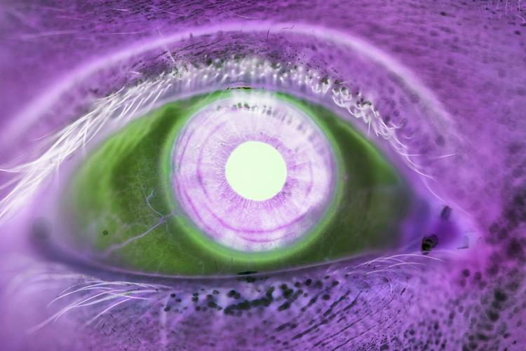 Eyes | I (Limited Edition of 8 | Large) - Image 0