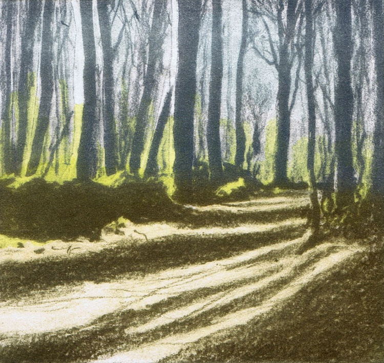 Woodland Shadow 4 - Image 0