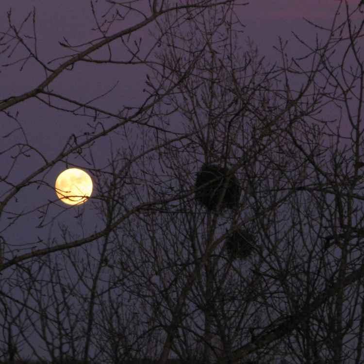 Lever de Lune -