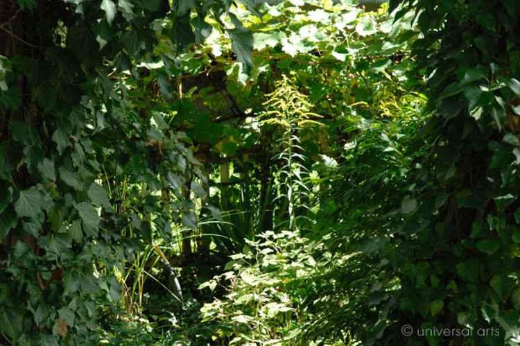 Gardengold -