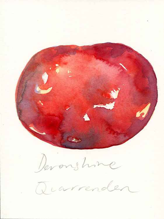 Devonshire Quarrenden Apple Watercolour -