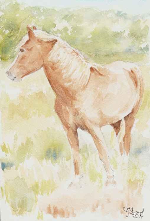 Palomino Pony -