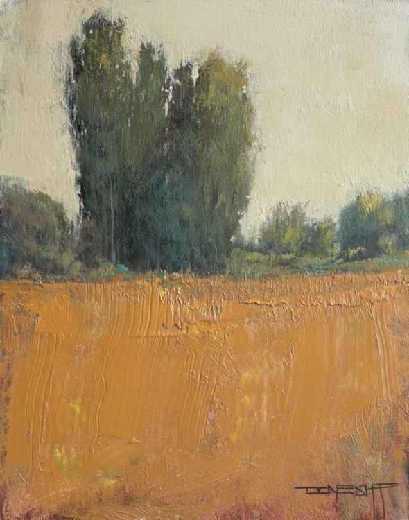 Texture Field -