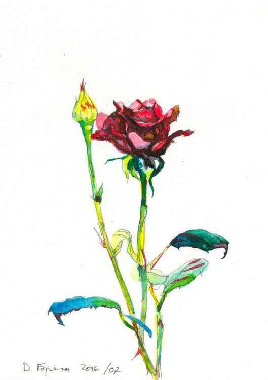 Rose, ink