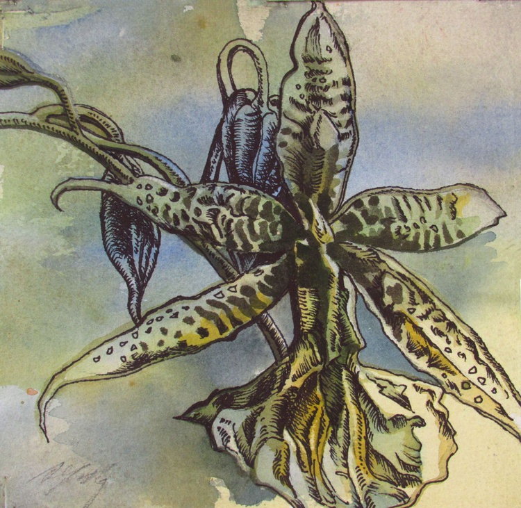 Ansellia orchid drawing - Image 0