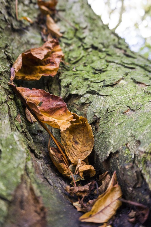 "Autumnal Tree  1/20  16"" X 12"" - Image 0"