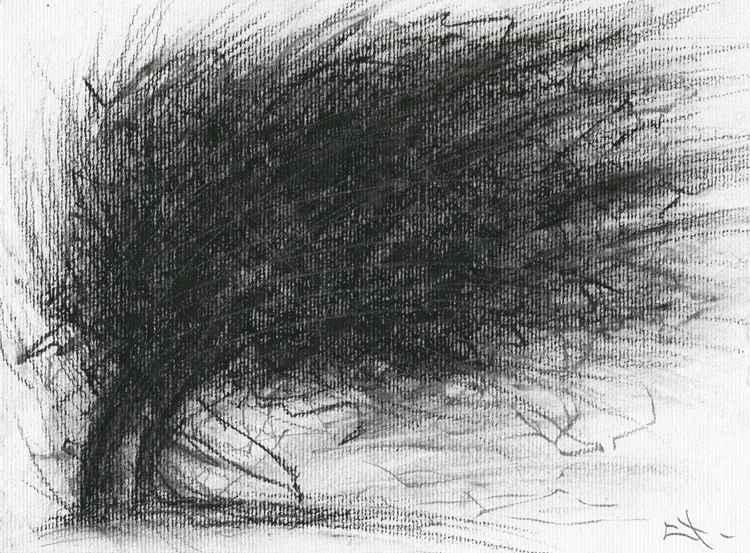 Etude d'arbre - tempête -
