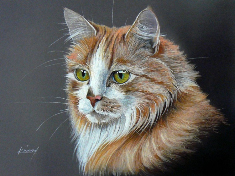 Ginger Cat - Image 0