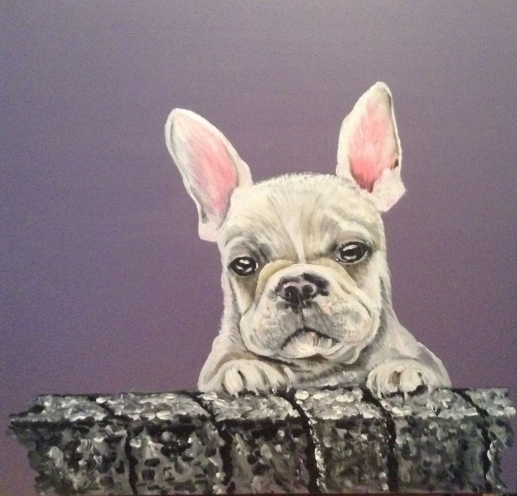 "Nosey Neighbour""  (French bulldog) 24 x 24 inch Acrylic on box Canvas - Image 0"