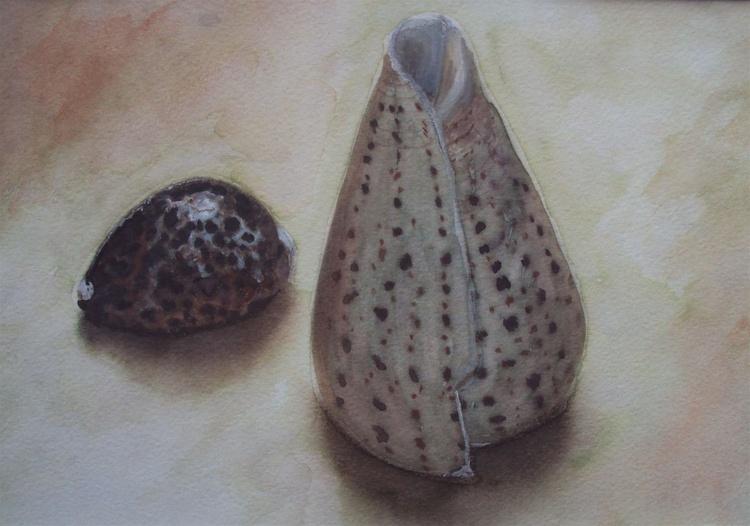 Shells Still Life - Image 0