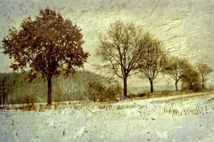 November Snow - Canvas 75 x 50 cm - Image 0
