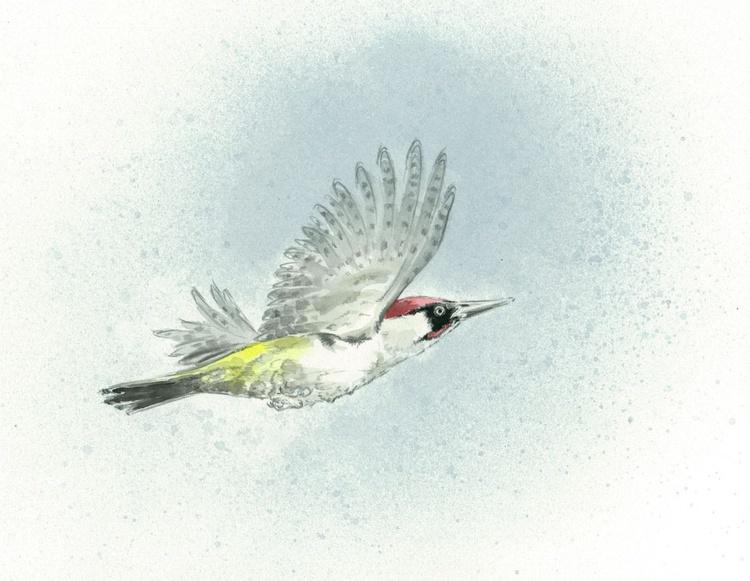 Green woodpecker in flight - Image 0