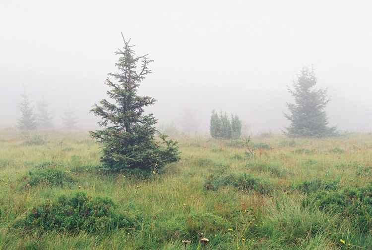 Fog -