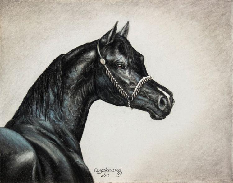 Black arabian horse - Image 0