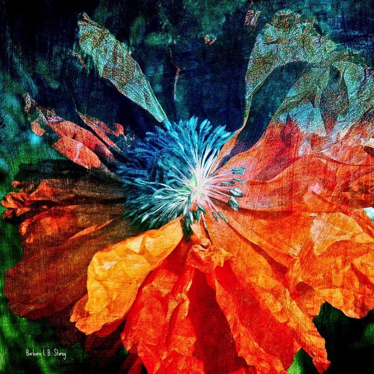 Wild Flame Poppy - Image 0