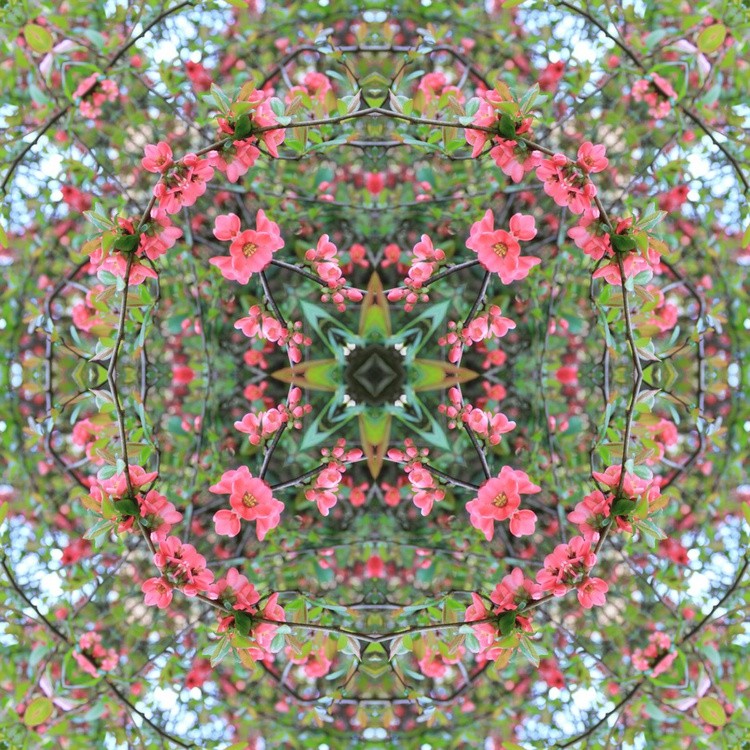 Blossom Mandala V - Image 0