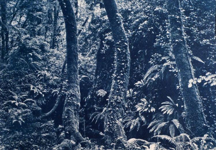 In the woods (Cyanotype) - Image 0