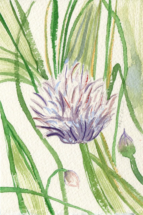 Original Framed Watercolour Painting of Chives - Image 0