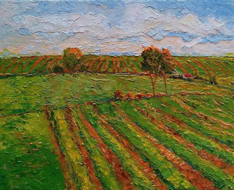 """California  Vineyards Landscape, """"Napa Morning"""" - Image 0"""