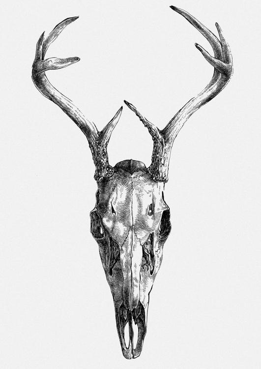 Deer skull v.01 - Image 0