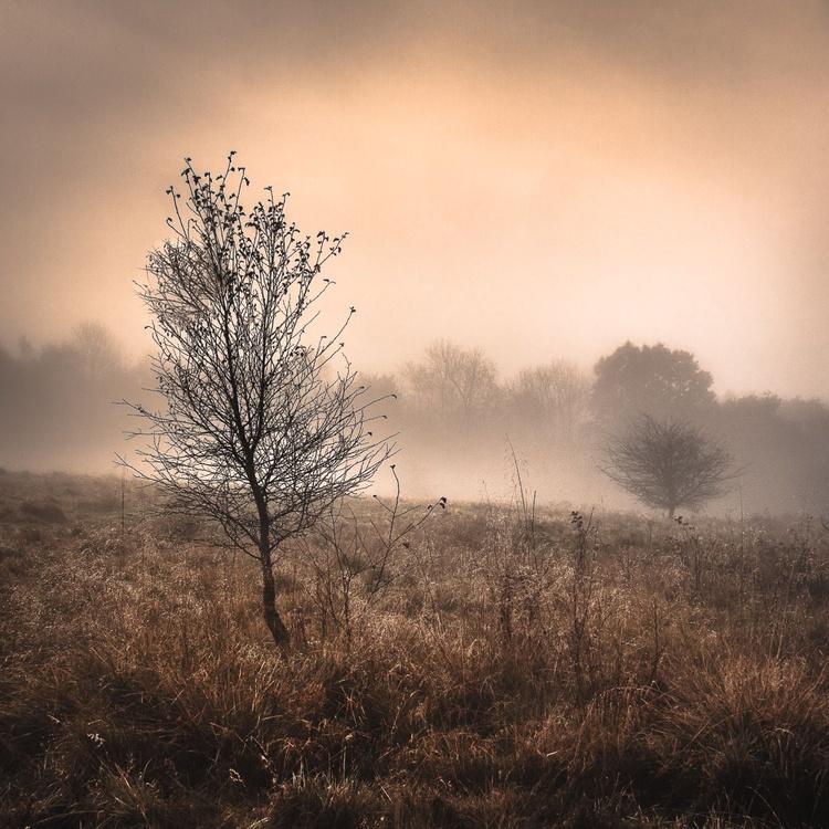 Dawn Dew - Image 0