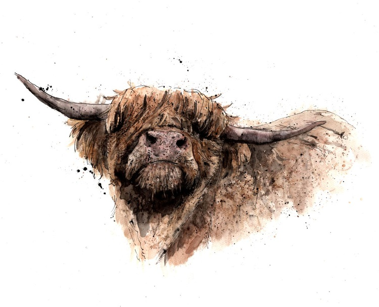 Highland Coo (A1 size) - Image 0