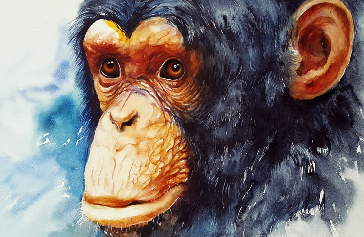 Jojo_ the Chimpanzee - Image 0