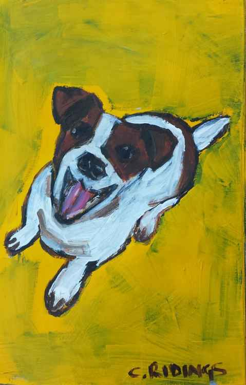 Jack Russell -