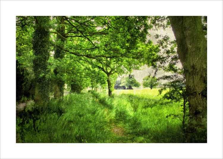 Tree lined Footpath -