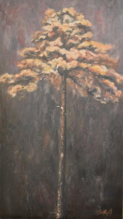 Pine-tree - Image 0