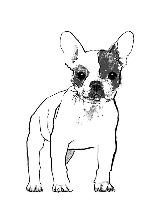 French Bulldog - Image 0