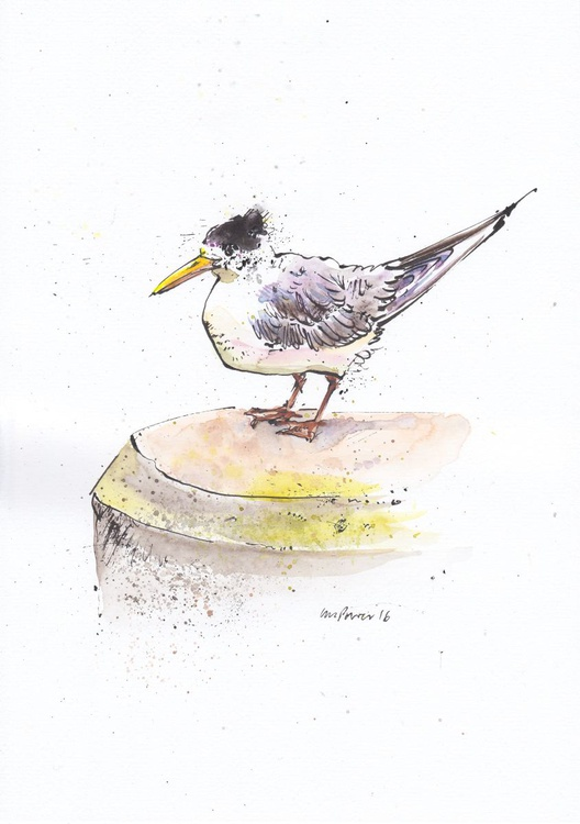 Crested Tern - Daily Bird #02 - Image 0