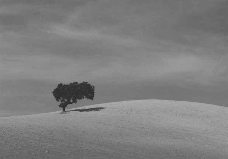 Single tree Spain