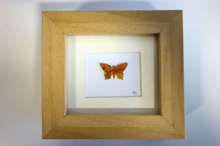 Single Butterfly No 21 - Image 0