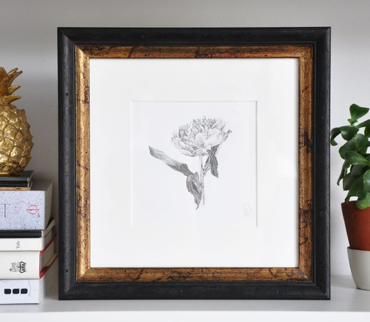 Original drawing of a peony - Image 0