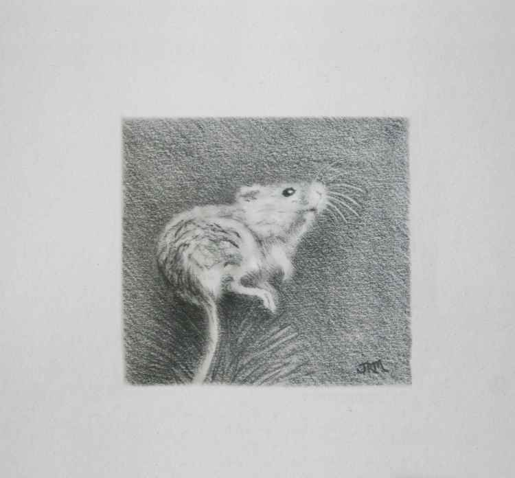 Tiny Harvest Mouse -