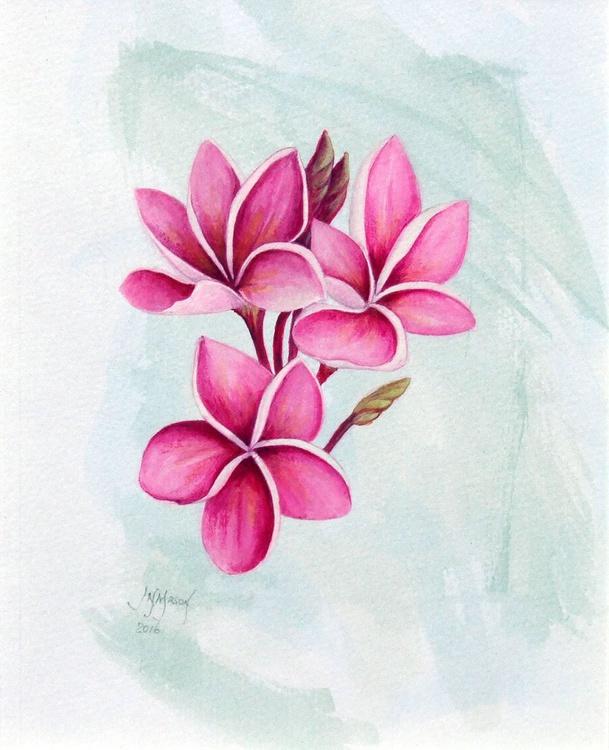 Pink Frangipani flowers - Image 0