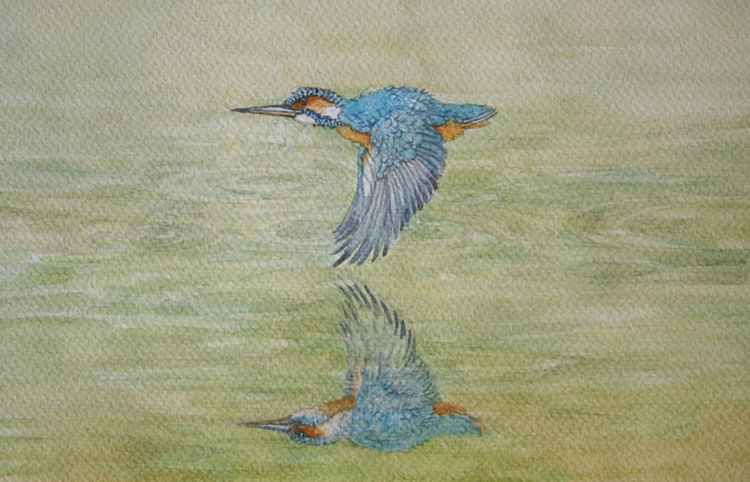 Kingfisher Reflection