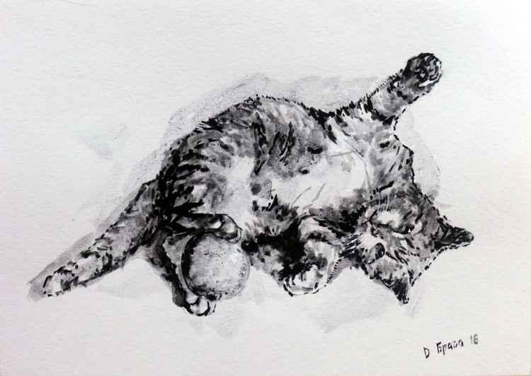 Cat 07 -