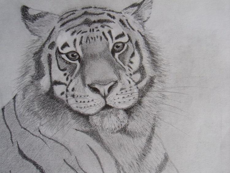 Tiger - Image 0