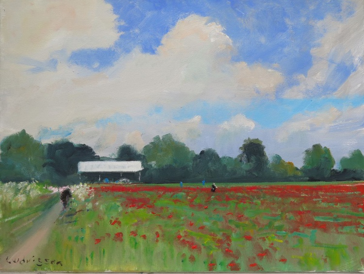 Poppy field near York. - Image 0