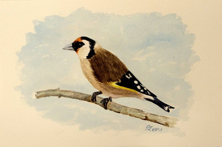 Goldfinch. - Image 0