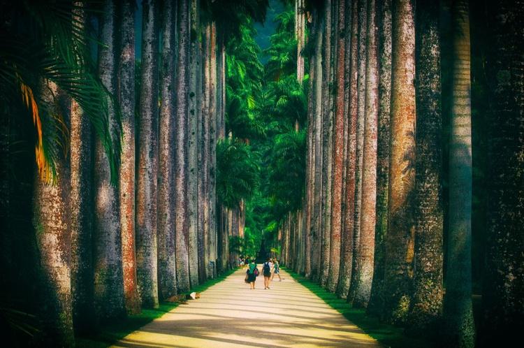 National Park Walk - Image 0