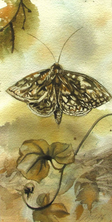 Autumn moth - Image 0