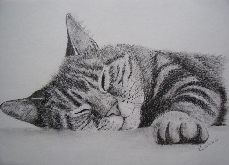 Cat napping - Image 0
