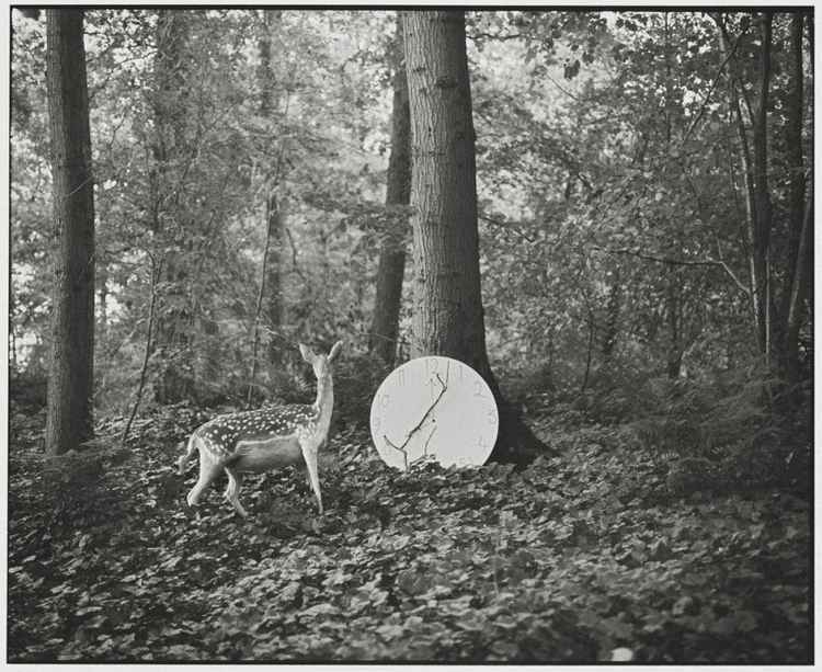 The Deer and the Clock (Small size) -