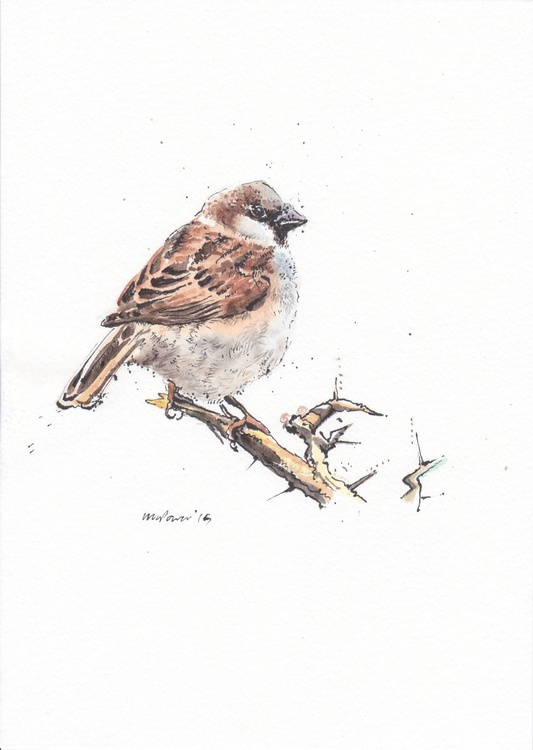 Sparrow & Thorns - Image 0