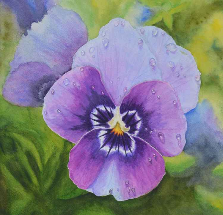 Pansy with dewdrops -