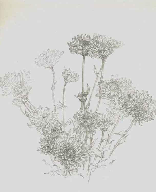 Flowers II -